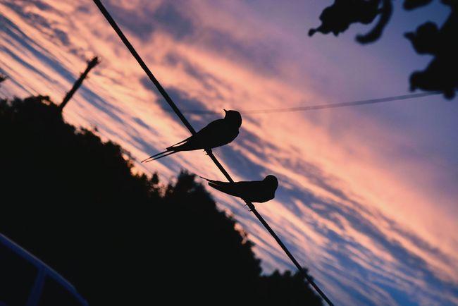Пам'ятаю той вечір. Чудовий пейзаж, чарівний захід сонця, неймовірні пташки та весела компанія. Люблю літні ве чірні посиденьки) Enjoying Life Birds Evening Perfect Night Summer
