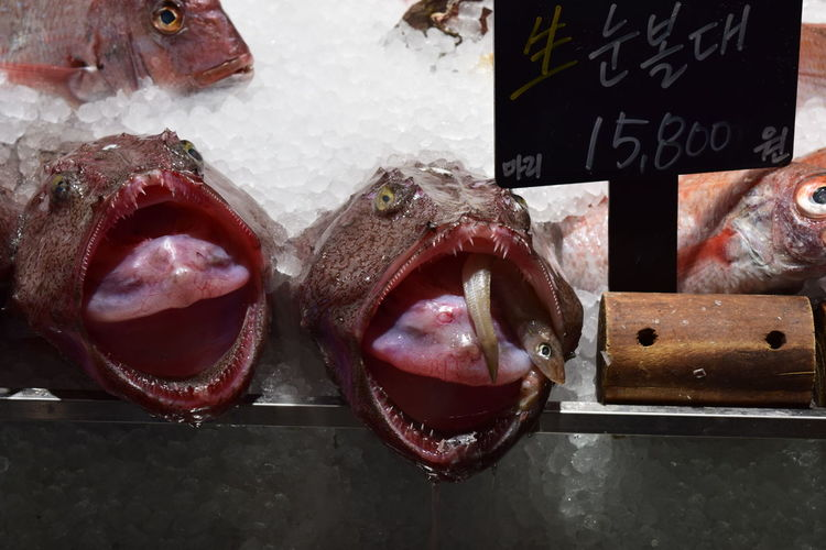Choice Close-up Fish Food For Sale Freshness Fun Funny Funny Faces Funny Fish Funny Fish Face Nikon NIKON D5300 Nikonphotography No Edit/no Filter No Filter No Filter, No Edit, Just Photography No People Nofilter Retail