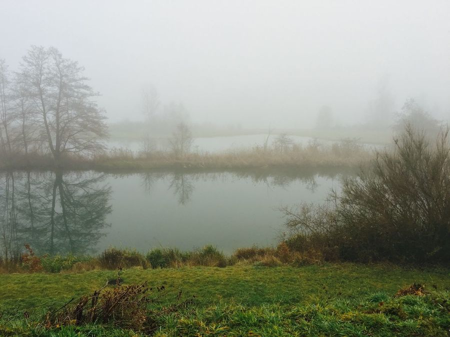 Water Reflections Spiegelung Nebel Showcase: December Fog Foggy Day Fog_collection Foggy