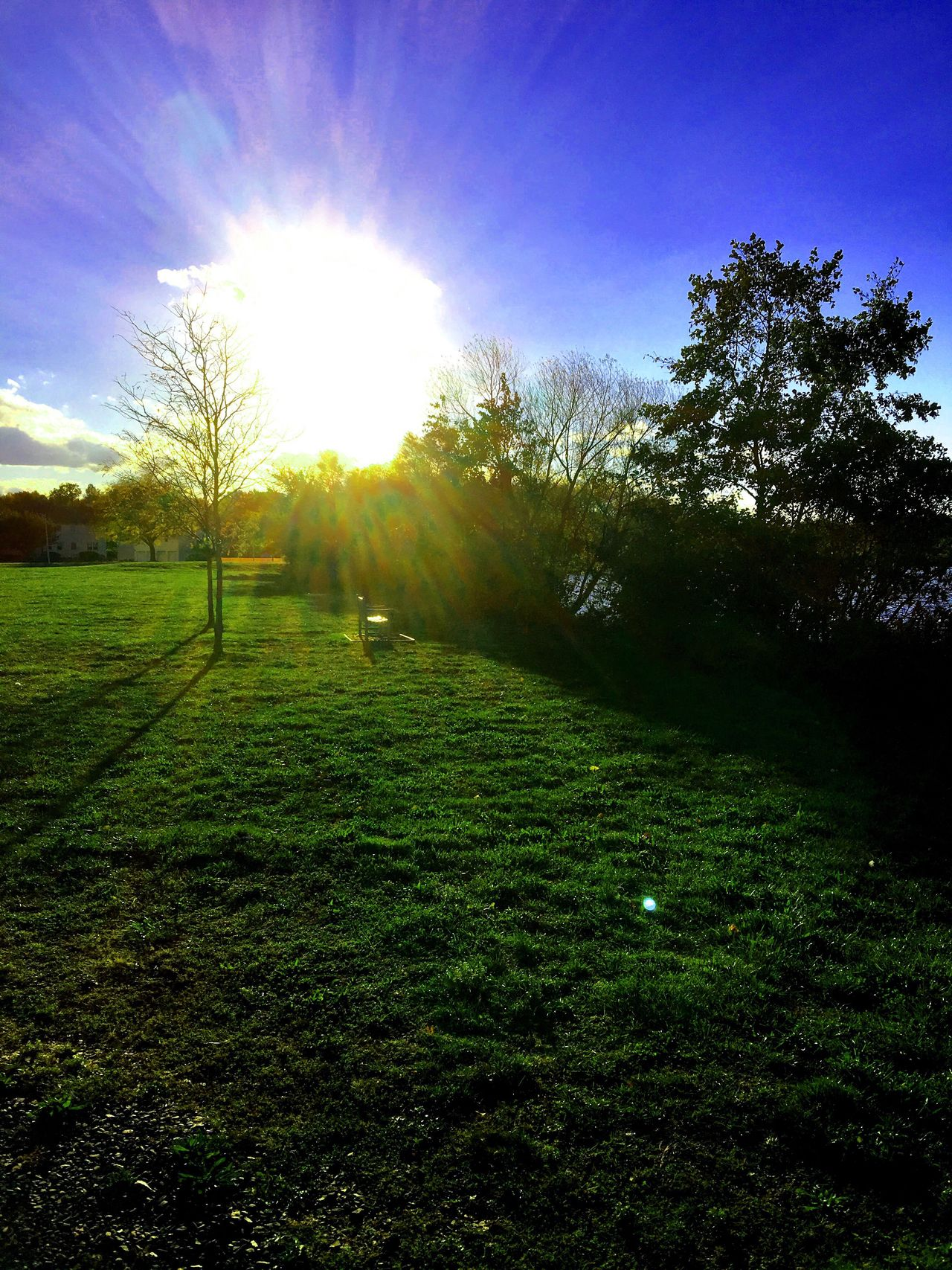 Sunset at the lake Grass Tree Sunlight Nature Green Color Beauty In Nature Sun Tranquility Tranquil Scene Outdoors No People Landscape Sky Iphonephotography Fallfoliage Fall Beauty Colorphotography Camerafilters