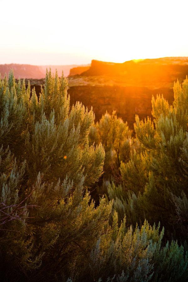 Backlight Backlit Backlit Sunset Beauty In Nature Desert High Desert Idaho Idyllic Landscape Nature No People Outdoors Peaceful Plant Plateau Sage Sky Snake River Snake River Valley Sun Sunbeam Sunset Tranquil Scene Tranquility Twin Falls