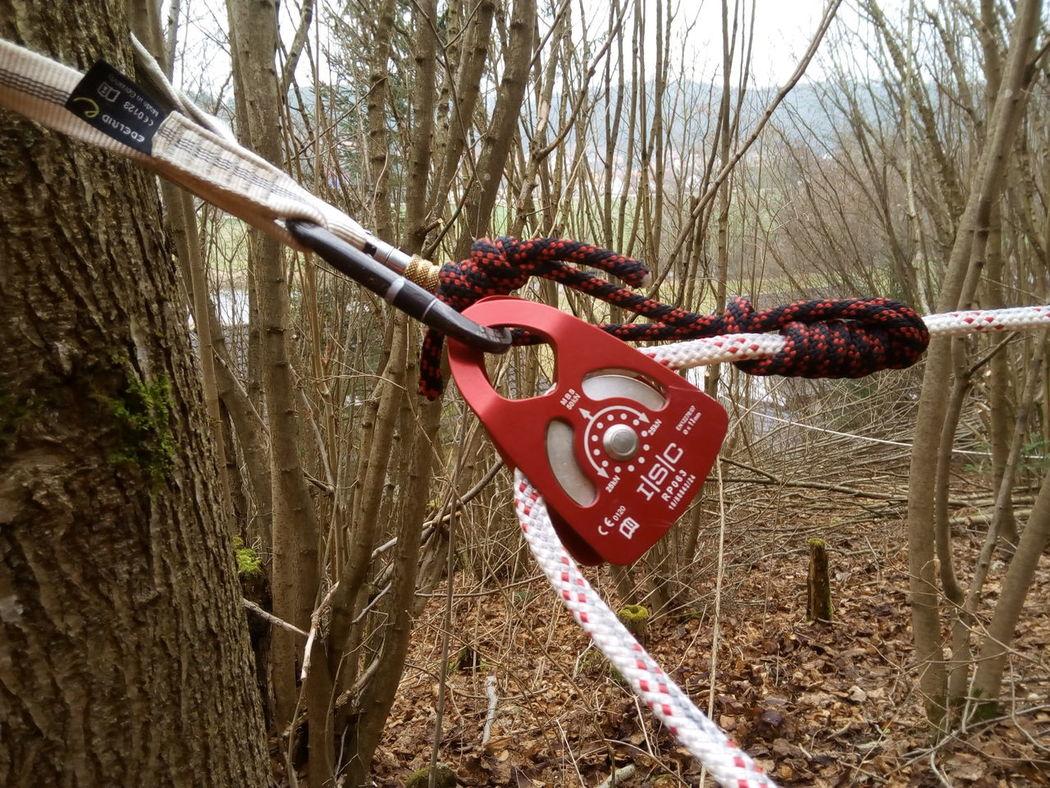 Baumfällung Tree No People Outdoors Seil Baum Baumpflege Im Wald Forest Bqaquaris Bq Seilrolle Klemmknoten Bandschlinge Karabiner