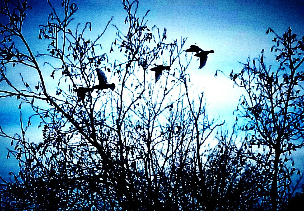 ...in flight... Showcase March Birds In Flight Birds🐦⛅ Blue Skies ⛅ Little Town In The Middle Of Nowhere Spring Is Coming  Beautiful World Country Life Life In Motion Nature At Its Finest:) Sony Xperia Blues And Birds🐦 I'm So Lucky 🍀 Taking A Walk Where My Feet Take Me The Simple Life