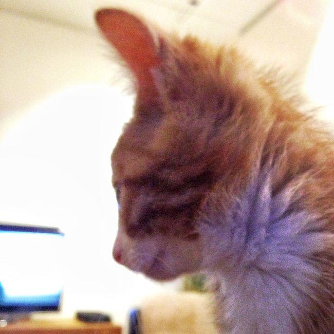 Cat Kitten Kitty Cat