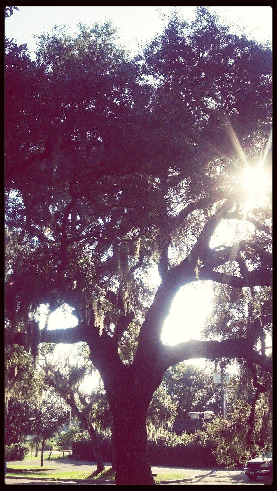 Tree TreePorn Nature Backlighting