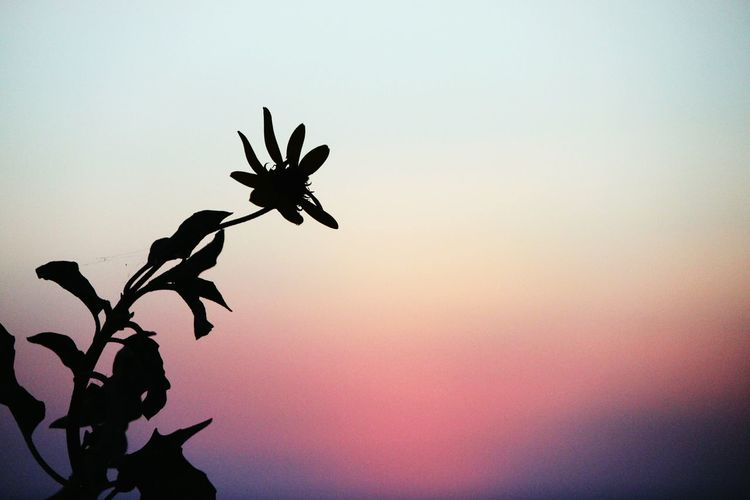 Simple. I like simple :) Sunset Flower Sillouette Simple Beauty