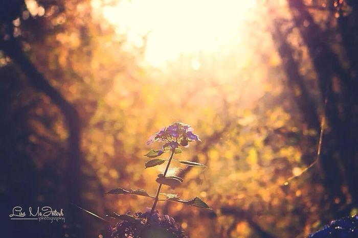 Bokehh Flowers Sunset Canon