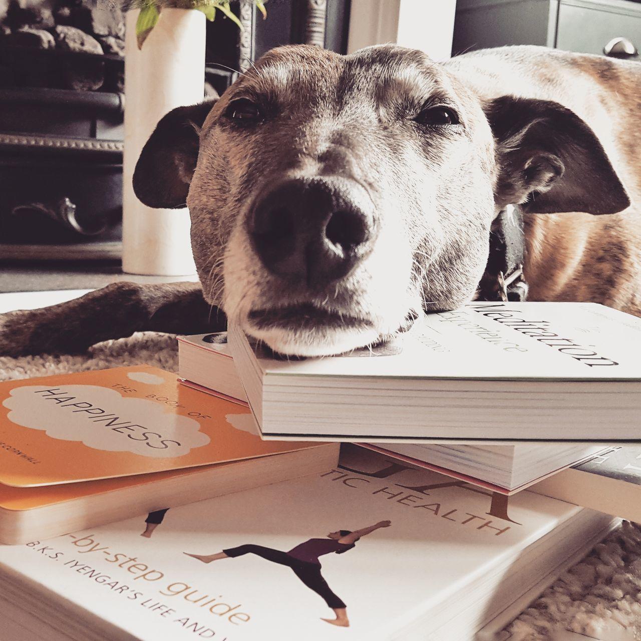 my dog ned resting Dog Dogslife Dog Sleeping  Dogrelaxing Lurcher Bull Lurcher Meditation Books Yoga Books