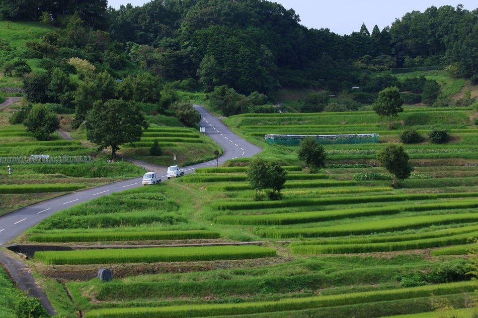 Early autumn in Asukamura village