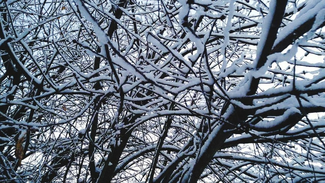 Tree Branch Nature No People Complexity Day Low Angle View Full Frame Beauty In Nature Outdoors Close-up Winter Backgrounds Sky Scenics EyeEm Gallery Check This Out Snow Covered Snow Covered Branch Tree_collection  Trees In Snow Silhouette Snowy Sky Tree