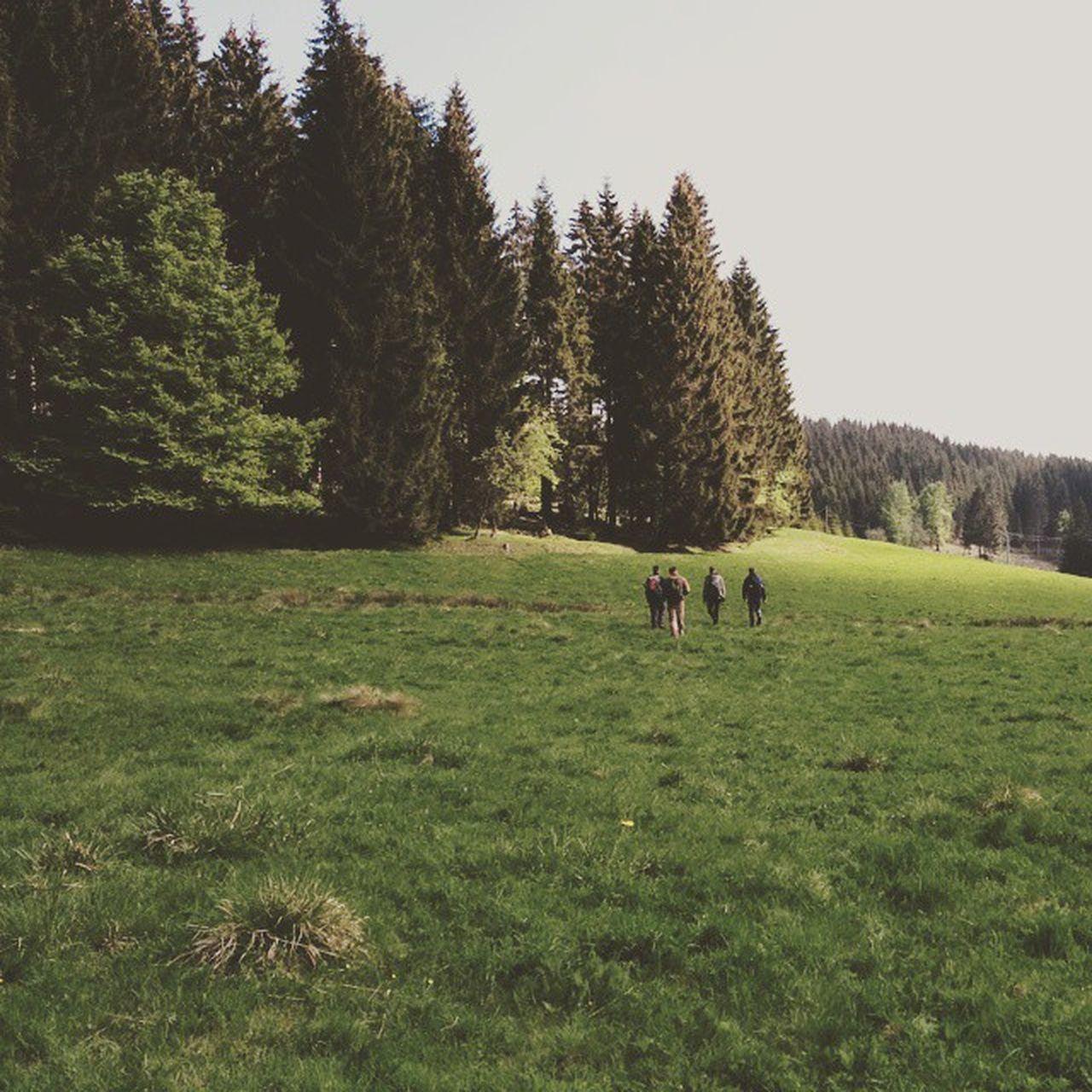 Walking, Talking, Drinking Fathersday Celebration Cometogheter Ilmenau rennsteig thuringia wood green nature outdoor walking