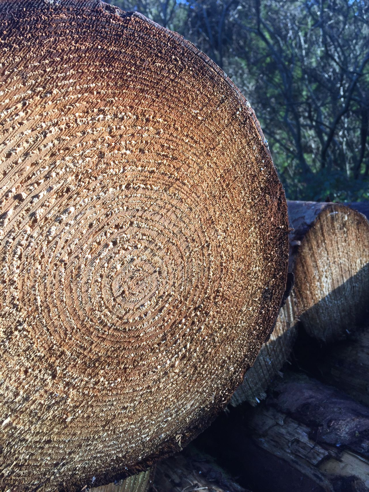 Close-up Log Lumber Industry No People Textured  Timber Nature Day Freshness No Filter, No Edit, Just Photography Mountain Scenics Tree Trunk