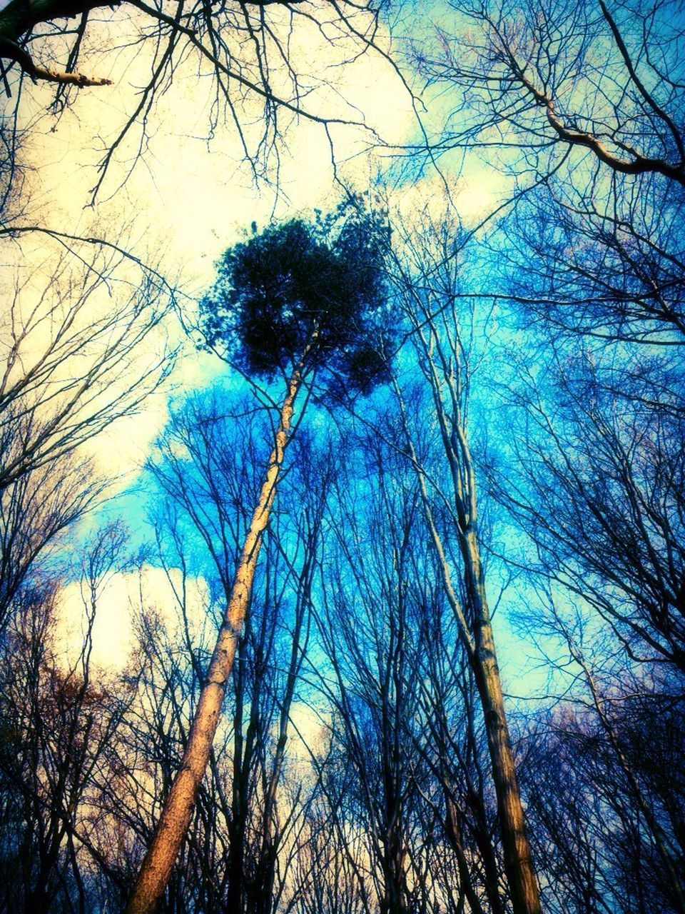 low angle view, tree, bare tree, nature, branch, outdoors, forest, beauty in nature, sky, no people, day, growth, blue