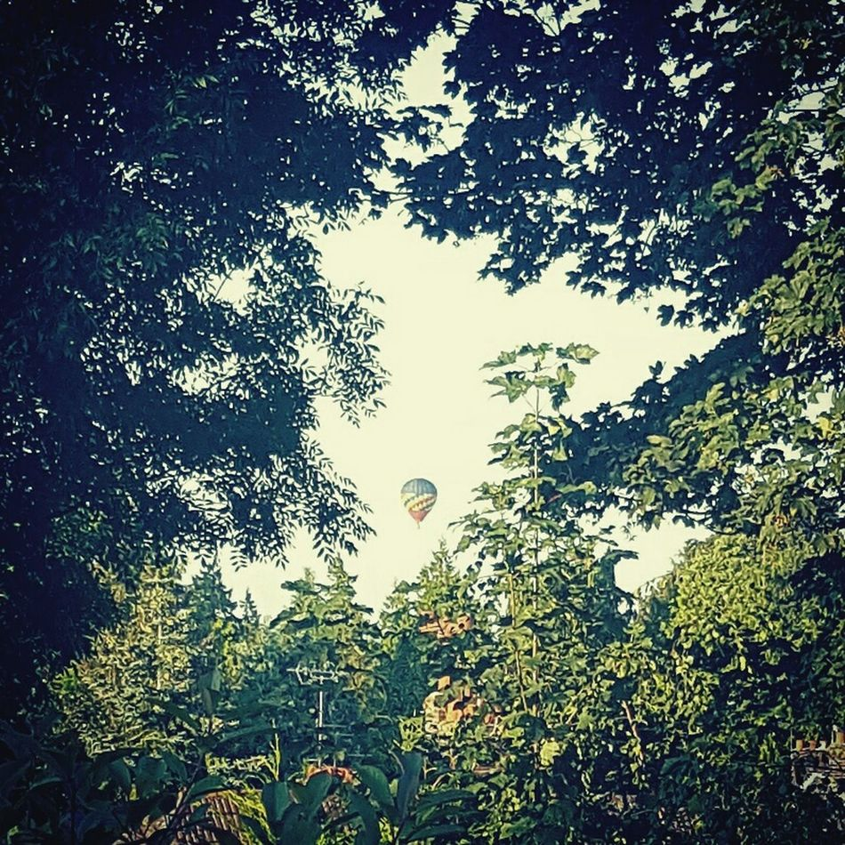 Hot Air Balloons Nature BackGarden Samsung S6 Ashford Kent Sky Tree Frame Greens Leaves Through The Trees Moment Captured Opportunistic Hot Evenings Igers