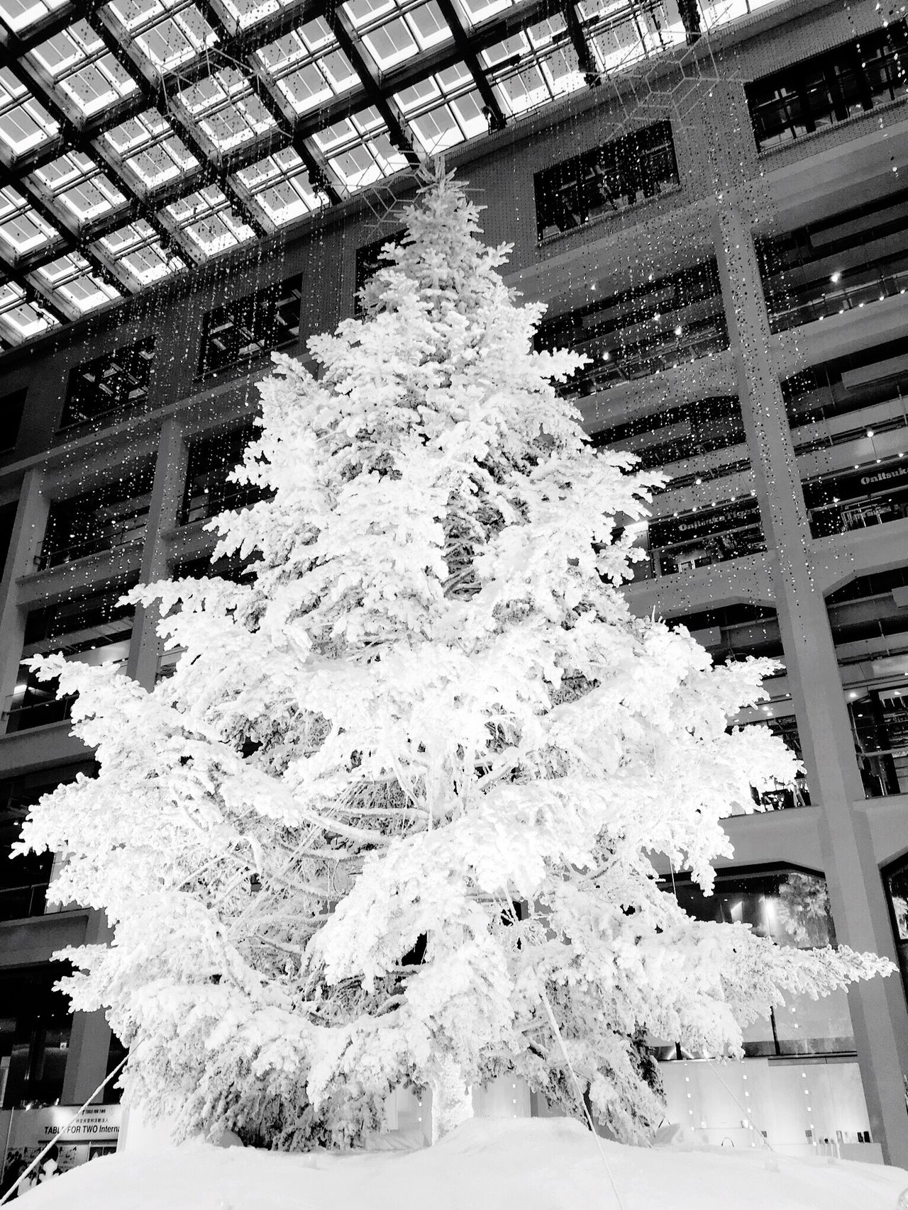 東京駅 丸の内南口前にあるKITTEにて。 KITTE Christmas Tree White Christmas Tokyo Tokyo Station KITTE MARUNOUCHI Hello World Tokyo Days Tadda Community Blackandwhite Photography Black And White Black & White Blackandwhite