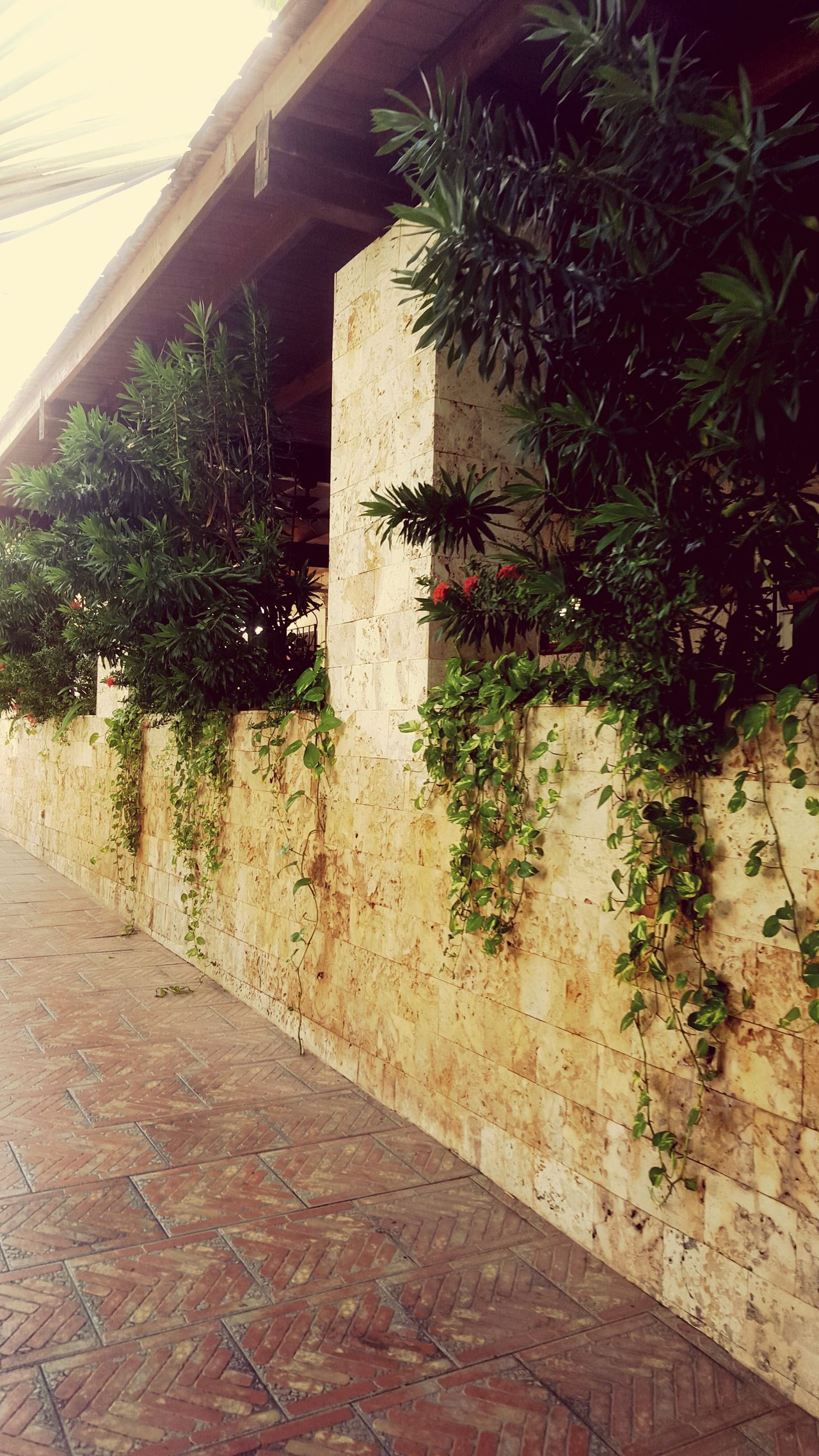 Nature claimed wall Plant Building Exterior Growth Outdoors Plant Life Vine Wall