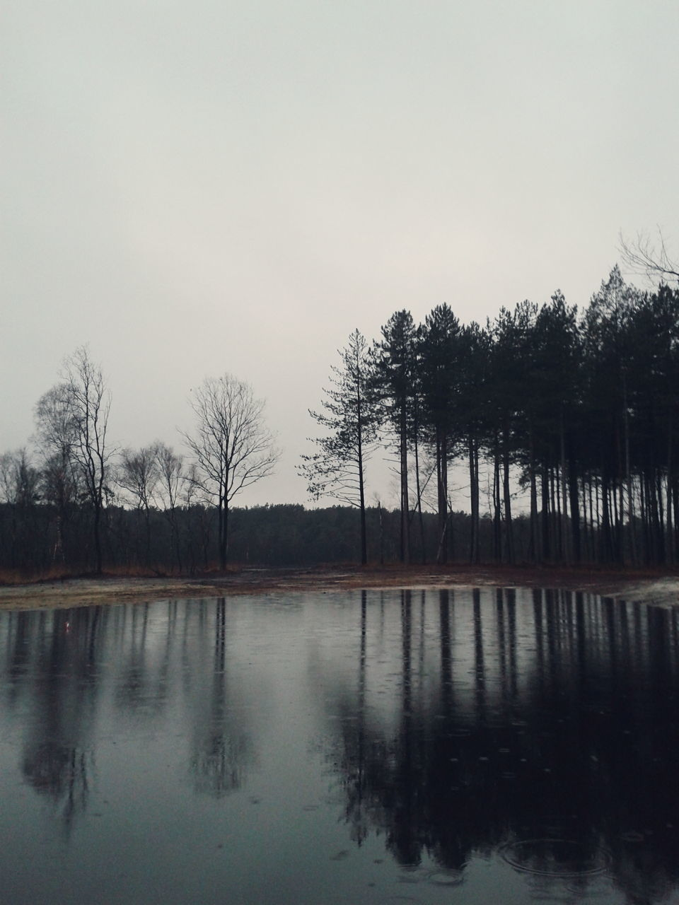 Reflection Of Trees On Lake Against Clear Sky