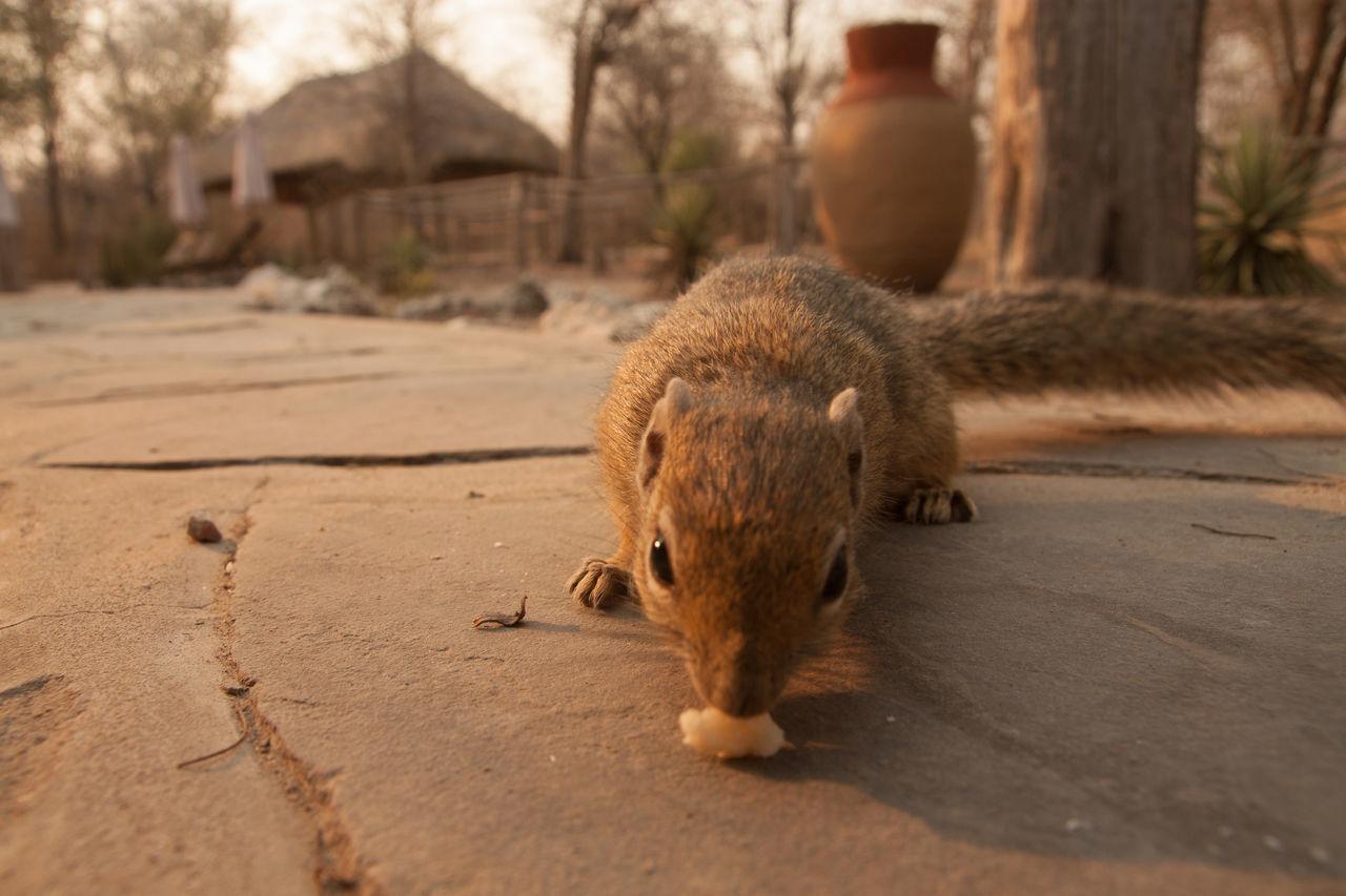 Beautiful stock photos of squirrel, Animal, Animal Face, Animal Themes, Close-Up