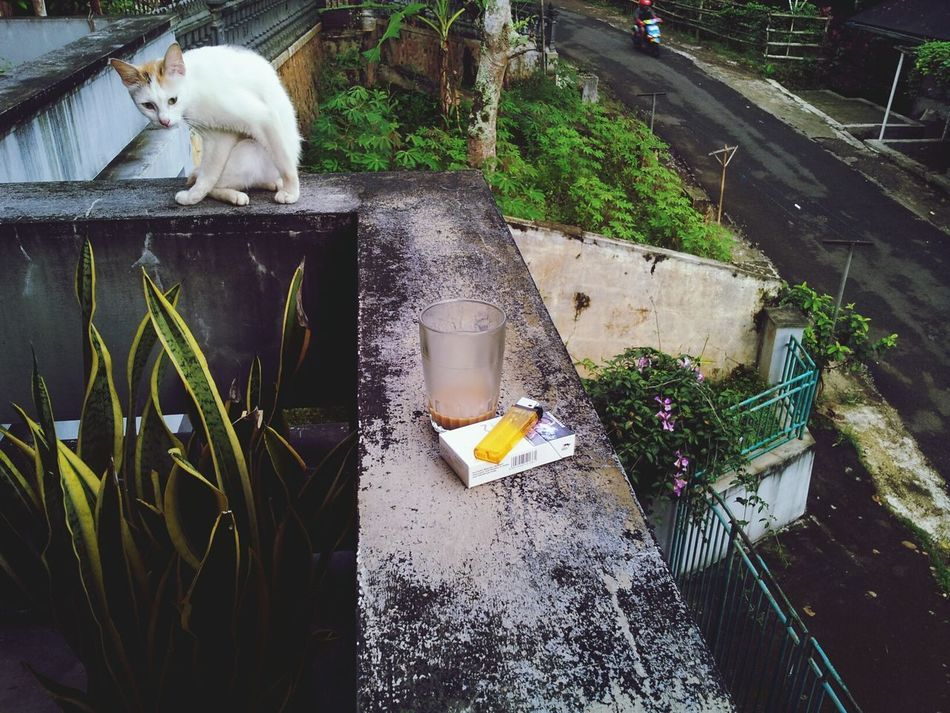 Pet Sun Coffee And Cigarettes Way To Go Home Roof