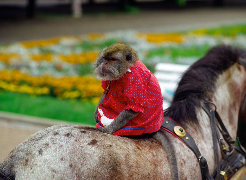 Animal Animal In The City Animal Themes Beak Focus On Foreground Krynica Looking Monkey Nature One Animal Poland Red Red Color Two Animals Zoology