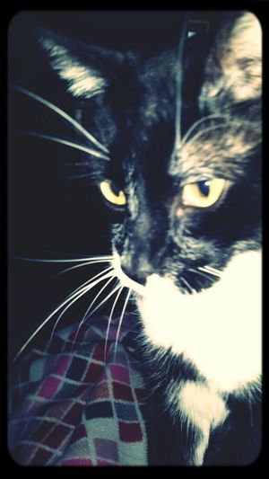 MY LITTLE CAT