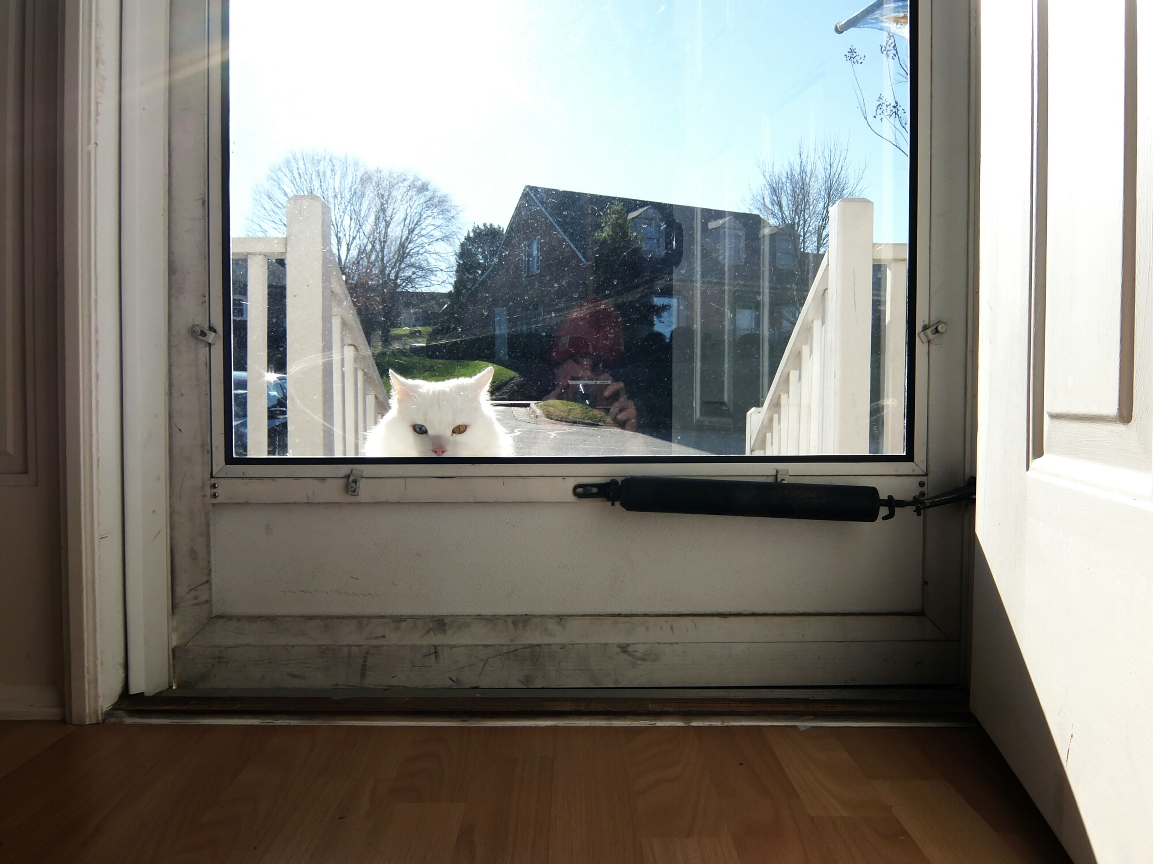pets, domestic animals, animal themes, window, mammal, one animal, architecture, building exterior, built structure, glass - material, dog, transparent, window sill, house, indoors, looking through window, domestic cat, tree, day, cat