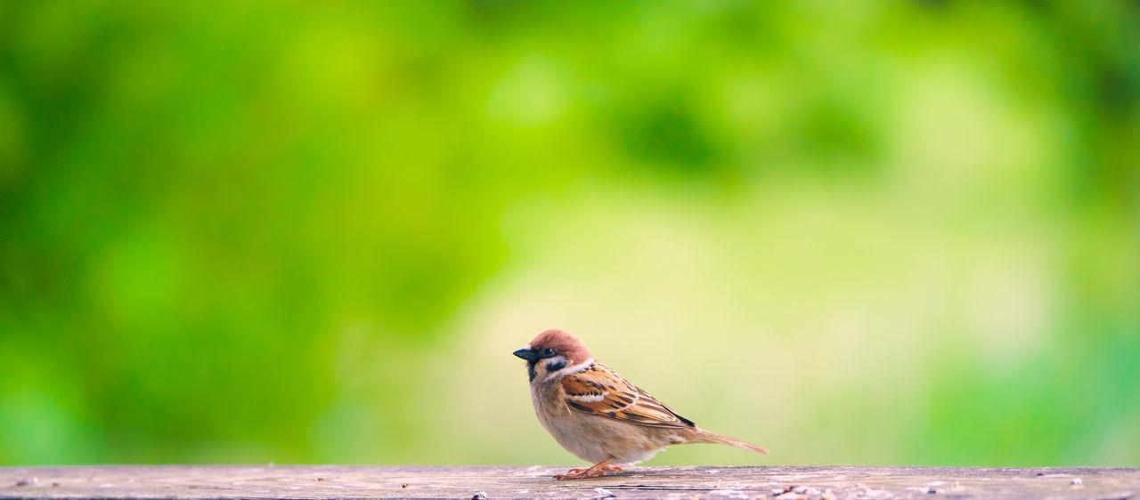 Bird Tiny Bird