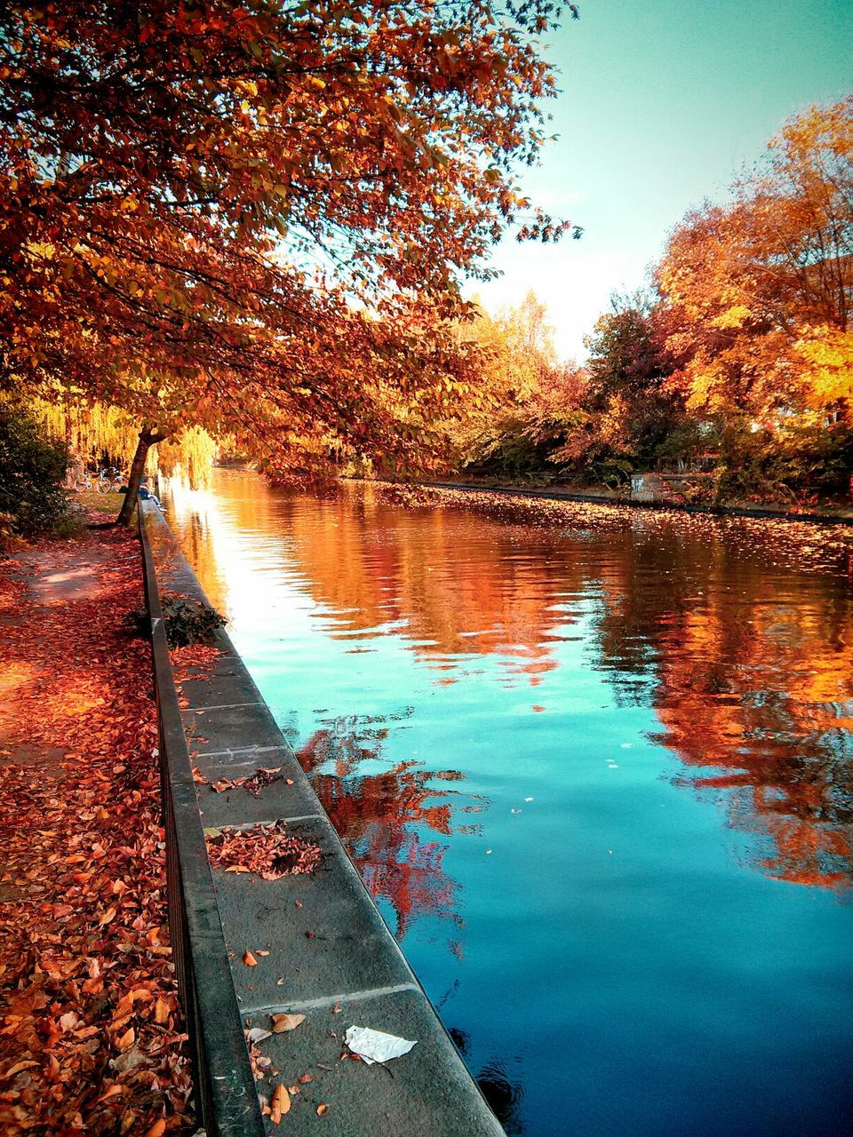 Autumn Trees Reflecting In Water Canal