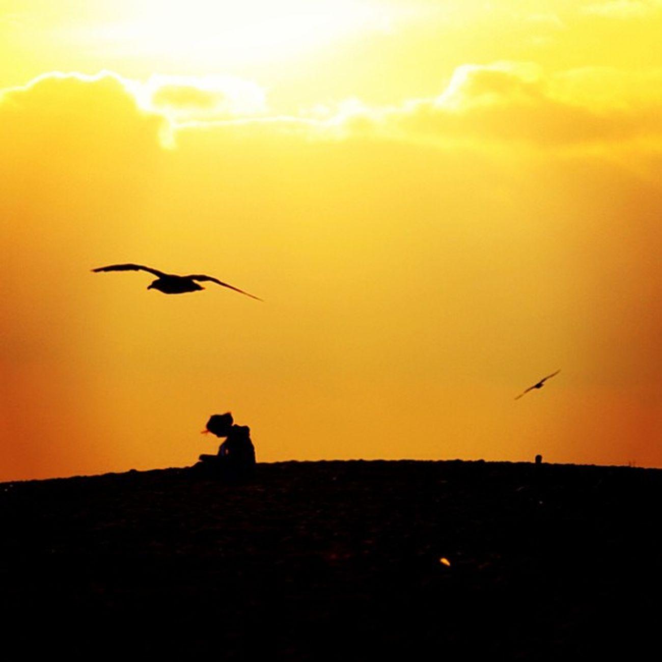 #igers #portugal #portugaligers #portugal_lovers #portugal_em_fotos #portugaloteuolhar #portugaldenorteasul #iphone5 #iphonesia #iphoneonly #instagood #instagram #instamood #figueira #figueiradafoz #buarcos #beach #jornalistasdeimagens #chiquesnourtemo #f Figueira Figueiradafoz Summer Portugaligers Beach Portugaldenorteasul Sun Buarcos Sunset Portugaloteuolhar Gaivotas Portugal Portugal_lovers Iphoneonly Portugal_em_fotos Iphonesia Jornalistasdeimagens Instagram IPhone5 Chiquesnourtemo Instamood Fotoencantada Igers Instagood