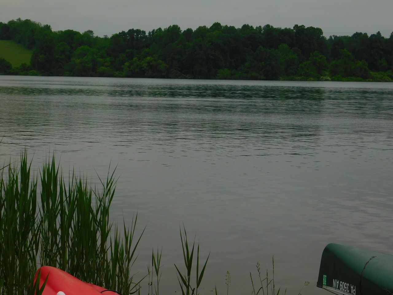 Marsh Creek Pa Chester Springs Pennsylvania Chester County Pennsylvania Kayaking Canoes Water Nature Tree Lake Growth No People Tranquility Outdoors Beauty In Nature Tranquil Scene Scenics Plant Day Green Color Grass Sky