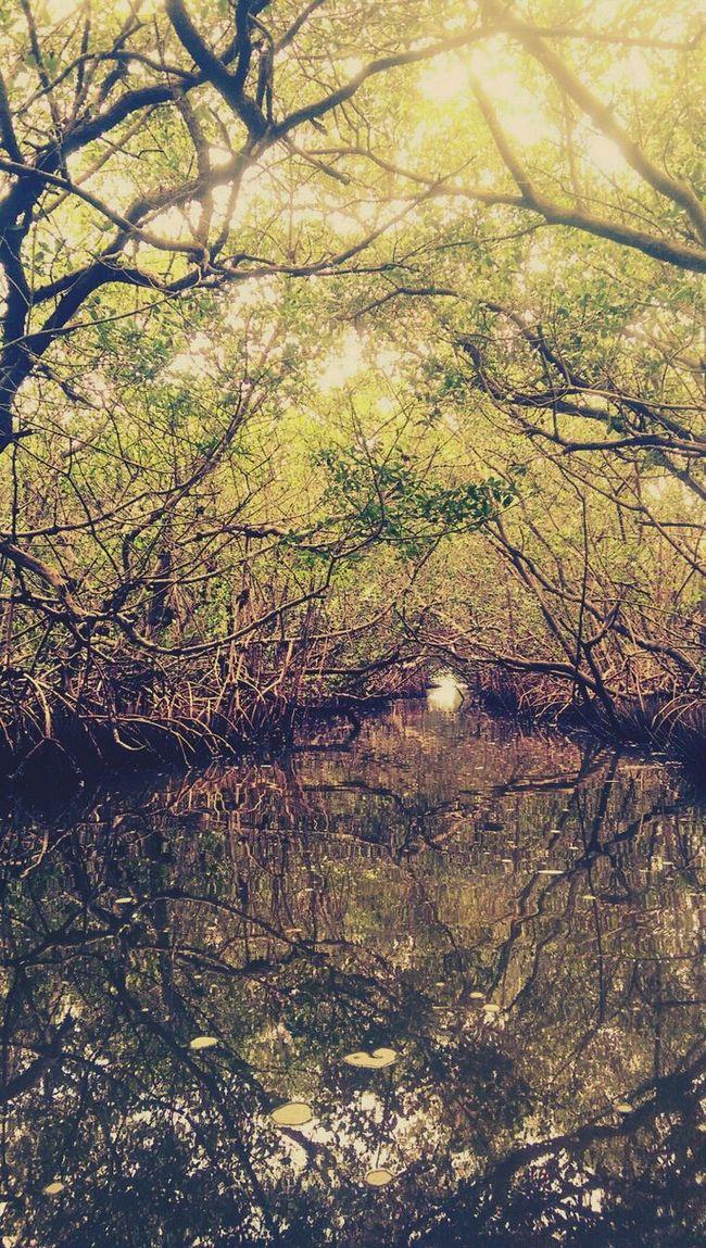 Robbinson Preserve Kayaking Enjoying Nature Florida
