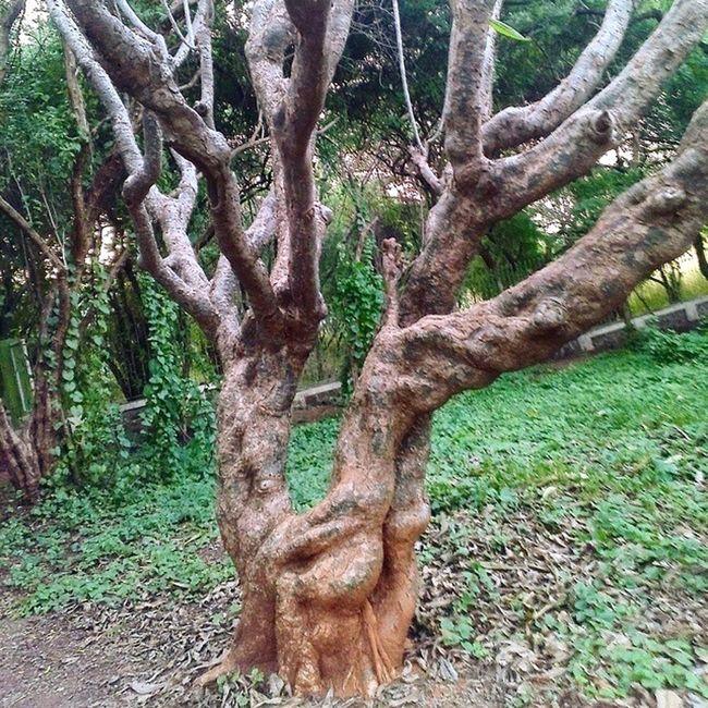 Tree Instagramers Puneinstagrammers UoP Universityofpune