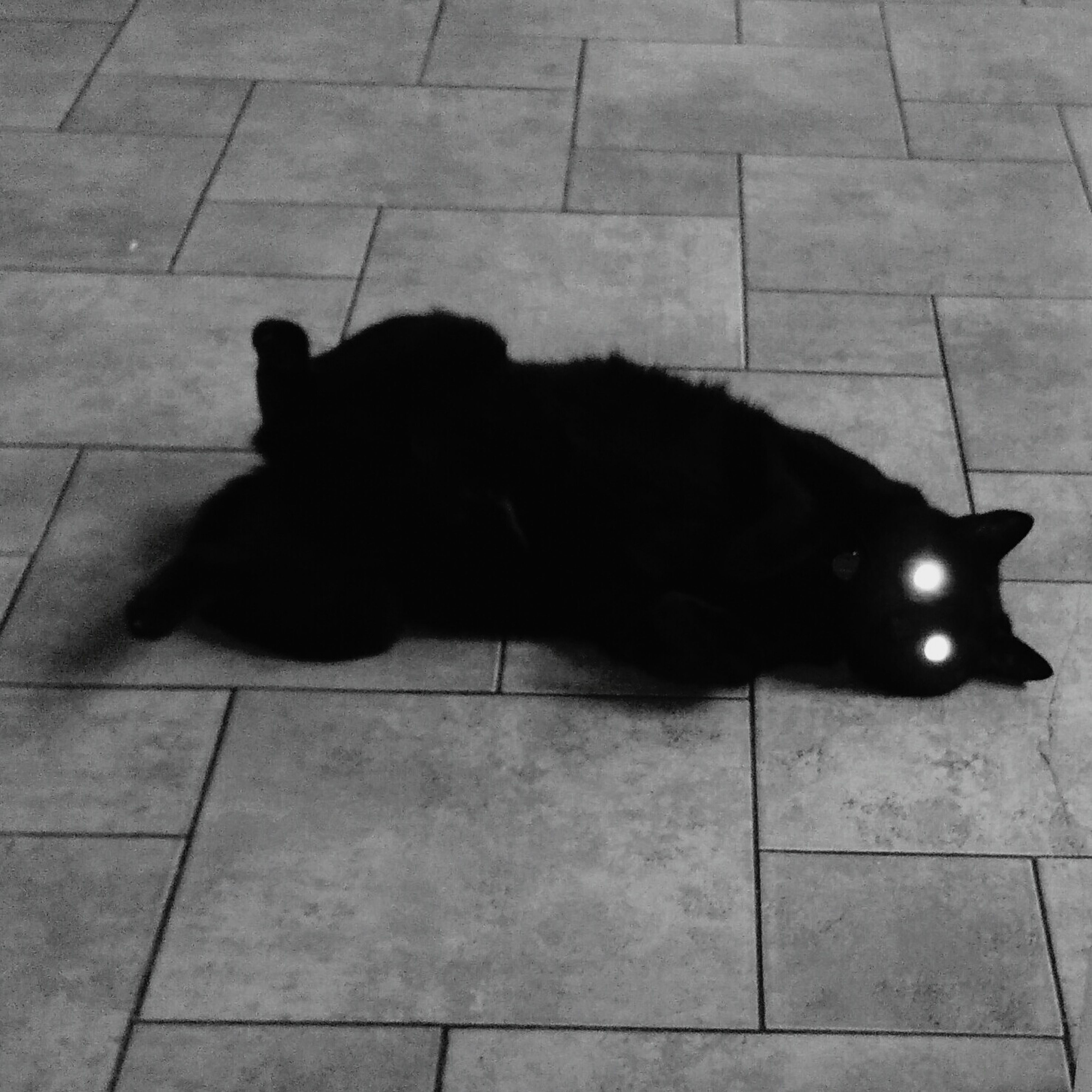 pets, domestic animals, domestic cat, animal themes, cat, one animal, mammal, feline, relaxation, indoors, black color, high angle view, tiled floor, lying down, flooring, resting, black, floor, full length, whisker