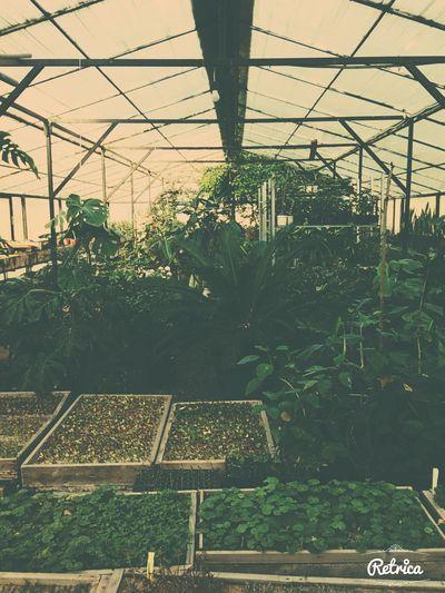 Green Flowers Garden