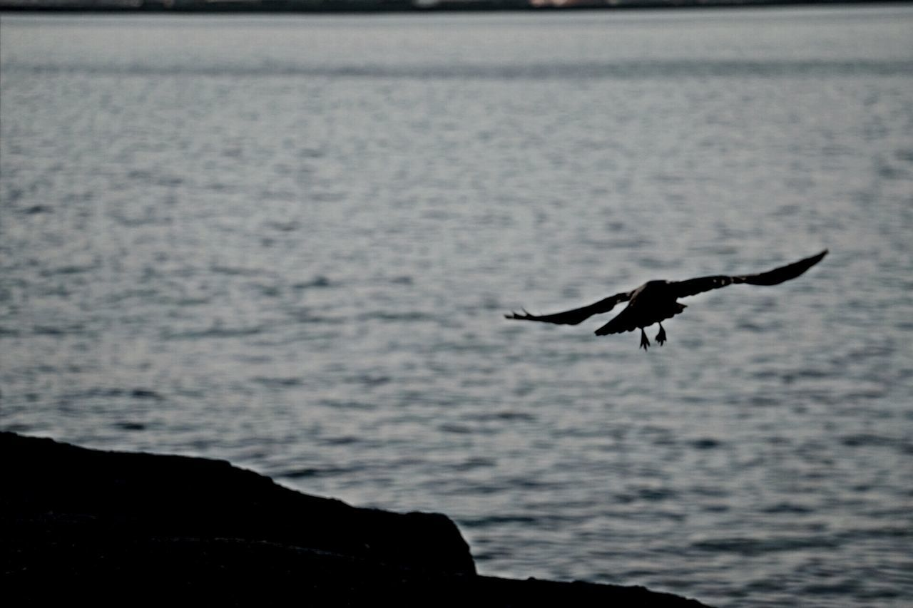Crow Flying In Air Over Sea
