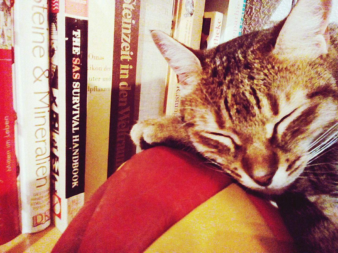 Domestic Cat Pets Domestic Animals One Animal Animal Themes Mammal Feline Cat Indoors  No People Day Tired Sleepy Cat Sleepy Kitty Sleeping Time Long Day At School Studying Hard Cute♡ Meow🐱 Women Around The World
