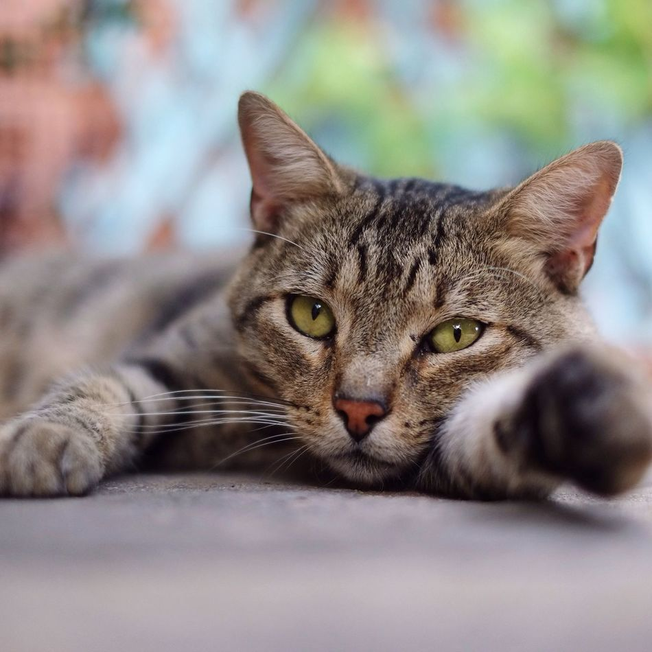 My first Eye Em Pic 😌 Portrait Domestic Animals Pets Cat Animal Looking At Camera Animal Themes Nature Photography Shycapture First Eyeem Photo Eyes Are Soul Reflection Eye nature