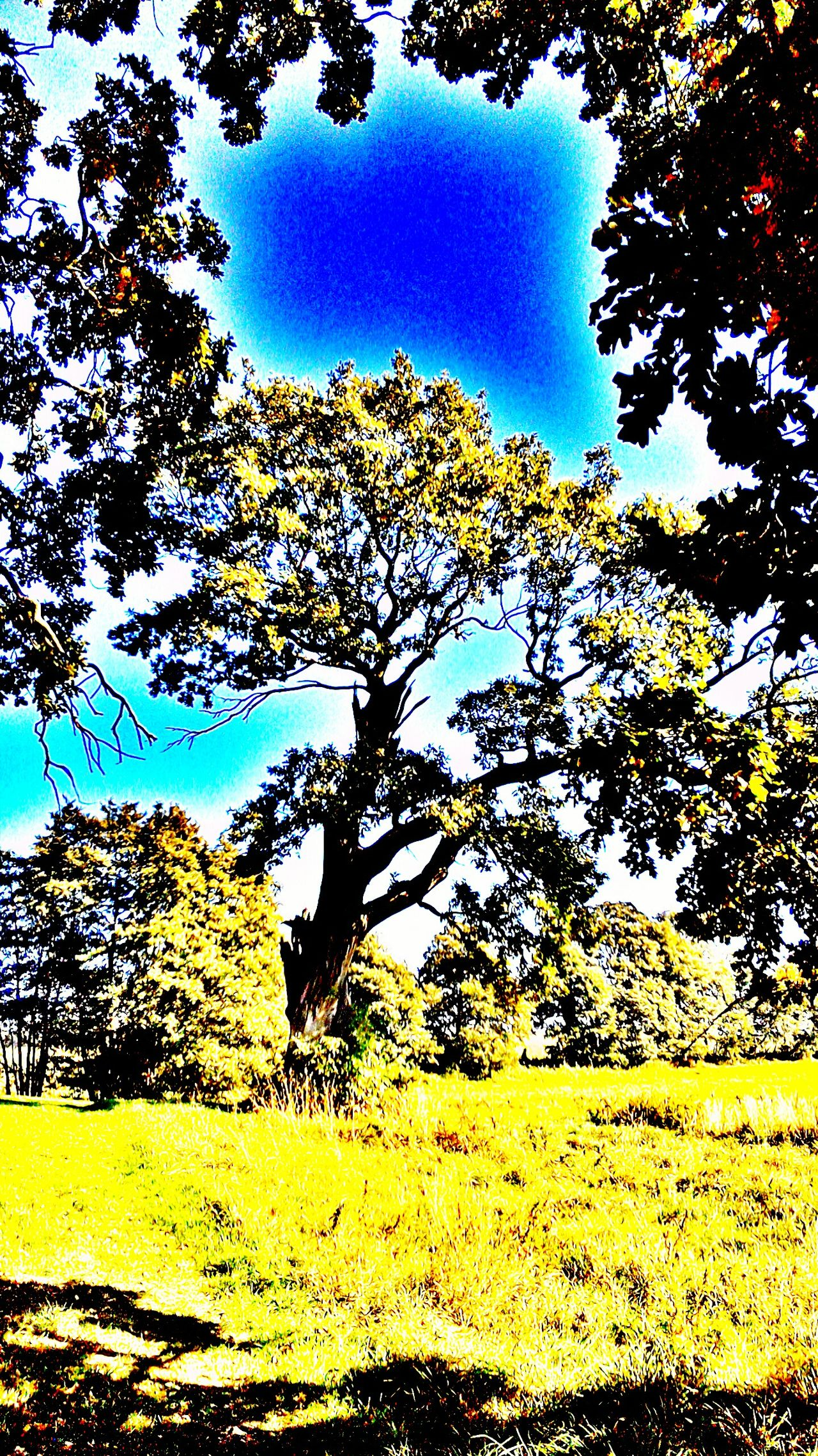 Relaxing Taking Photos Hanging Out Enjoying Life EyeEm Nature Lover Taking Photos Relaxing