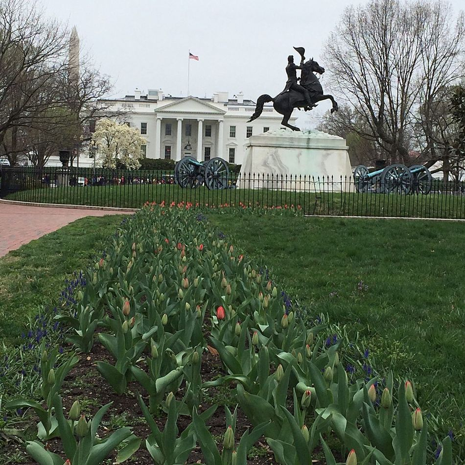 Washington, D. C. Tourists Tulips US Presidents Day Anderw Jackson statue Sculpture American Flag Cannons Layering Washington Monument The White House Flowers