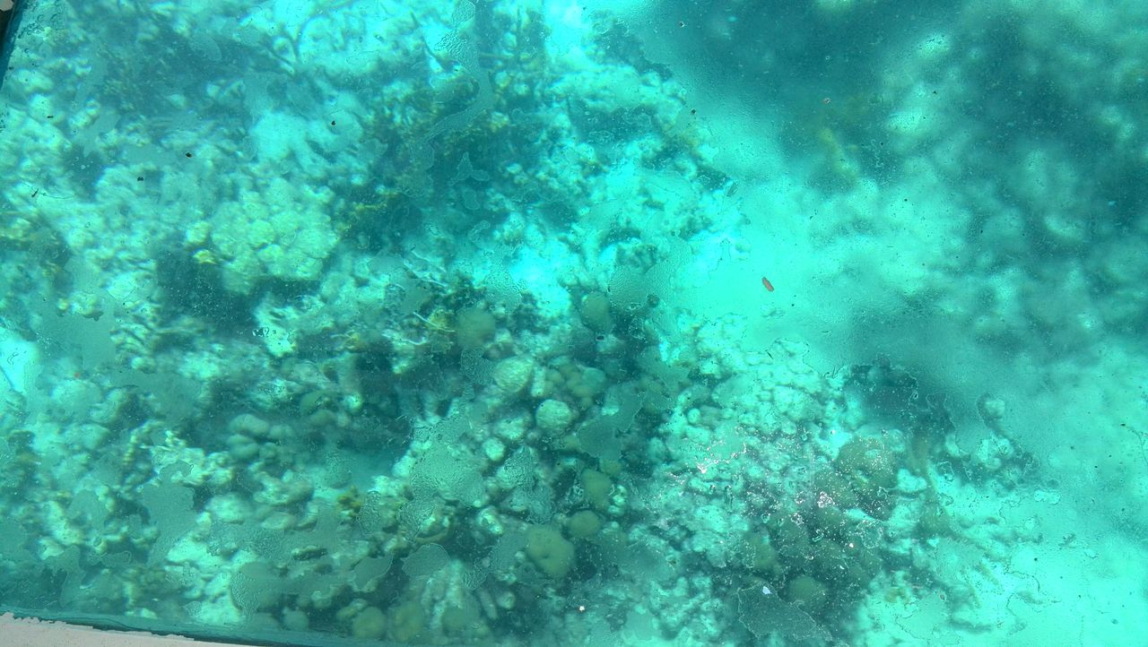underwater, undersea, sea, water, nature, coral, backgrounds, sea life, blue, no people, swimming, day, beauty in nature, outdoors