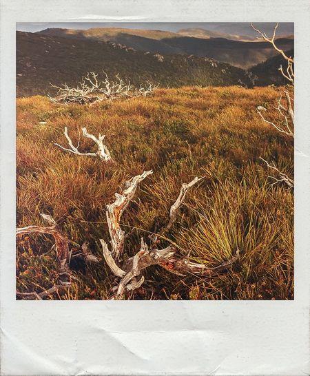 Photographic Approximation Wizard Of Oz Land Alpine Australia