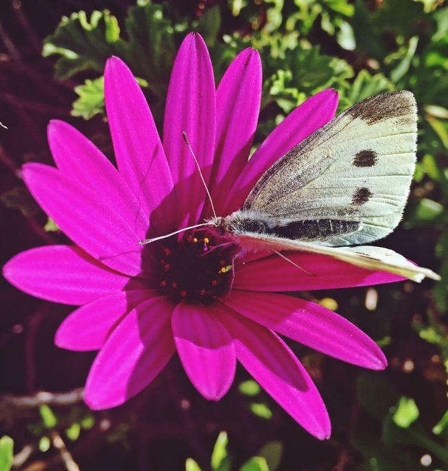 Nature_collection Butterfly