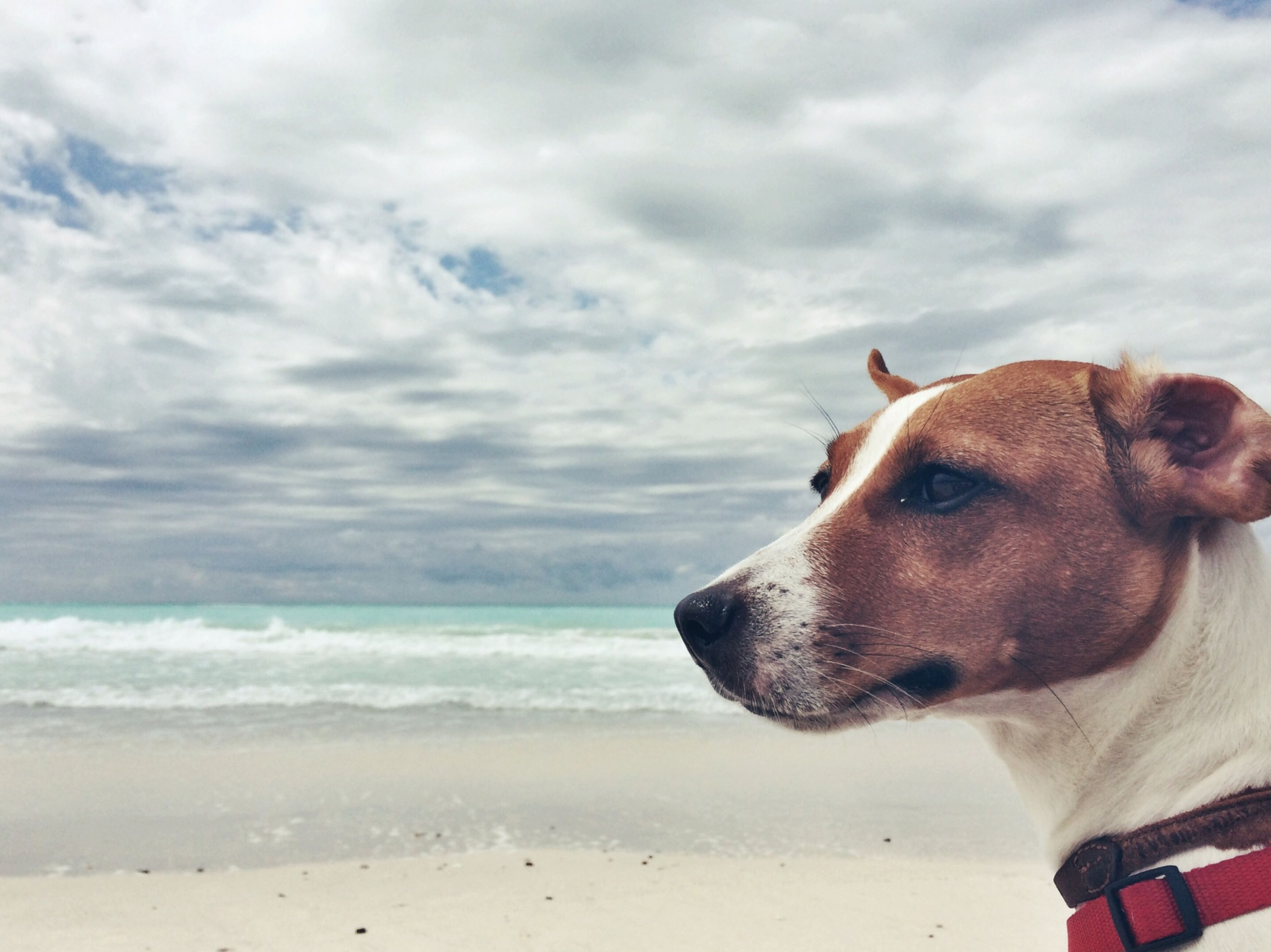 beach, sky, sea, domestic animals, cloud - sky, animal themes, sand, dog, shore, one animal, mammal, water, horizon over water, pets, cloudy, cloud, nature, scenics, tranquil scene, tranquility