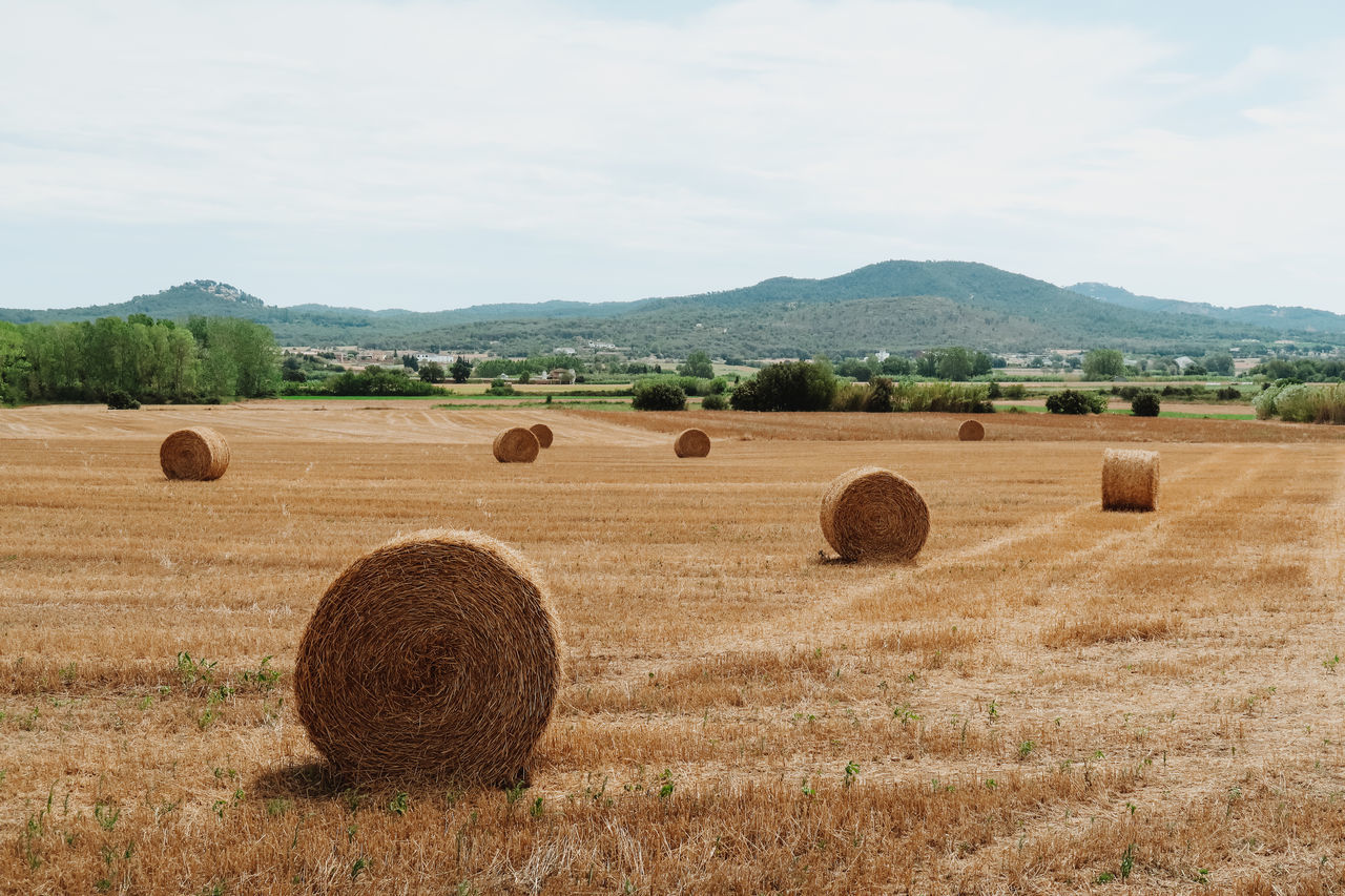 Agriculture Bale  Beauty In Nature Crop  Day Farm Field Harvesting Hay Hay Bale Haystack Landscape Mountain Nature No People Outdoors Rolled Up Rural Scene Scenics Sky Tranquil Scene Tranquility