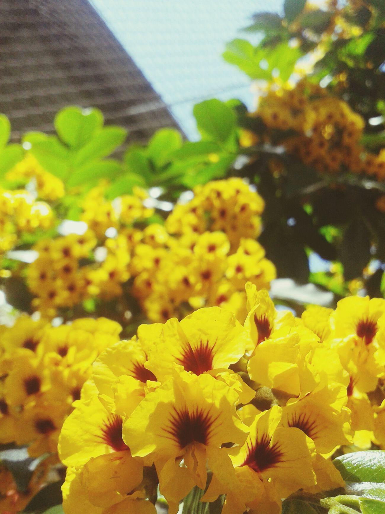 Um olhar diferente para uma coisa tão simples Flores Ambiente EmAlgumLugar Amoanatureza