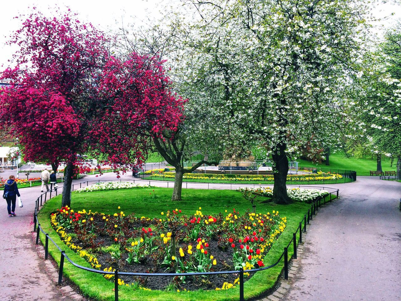 growth, flower, tree, blossom, nature, beauty in nature, springtime, botany, park - man made space, freshness, plant, fragility, green color, outdoors, day, no people