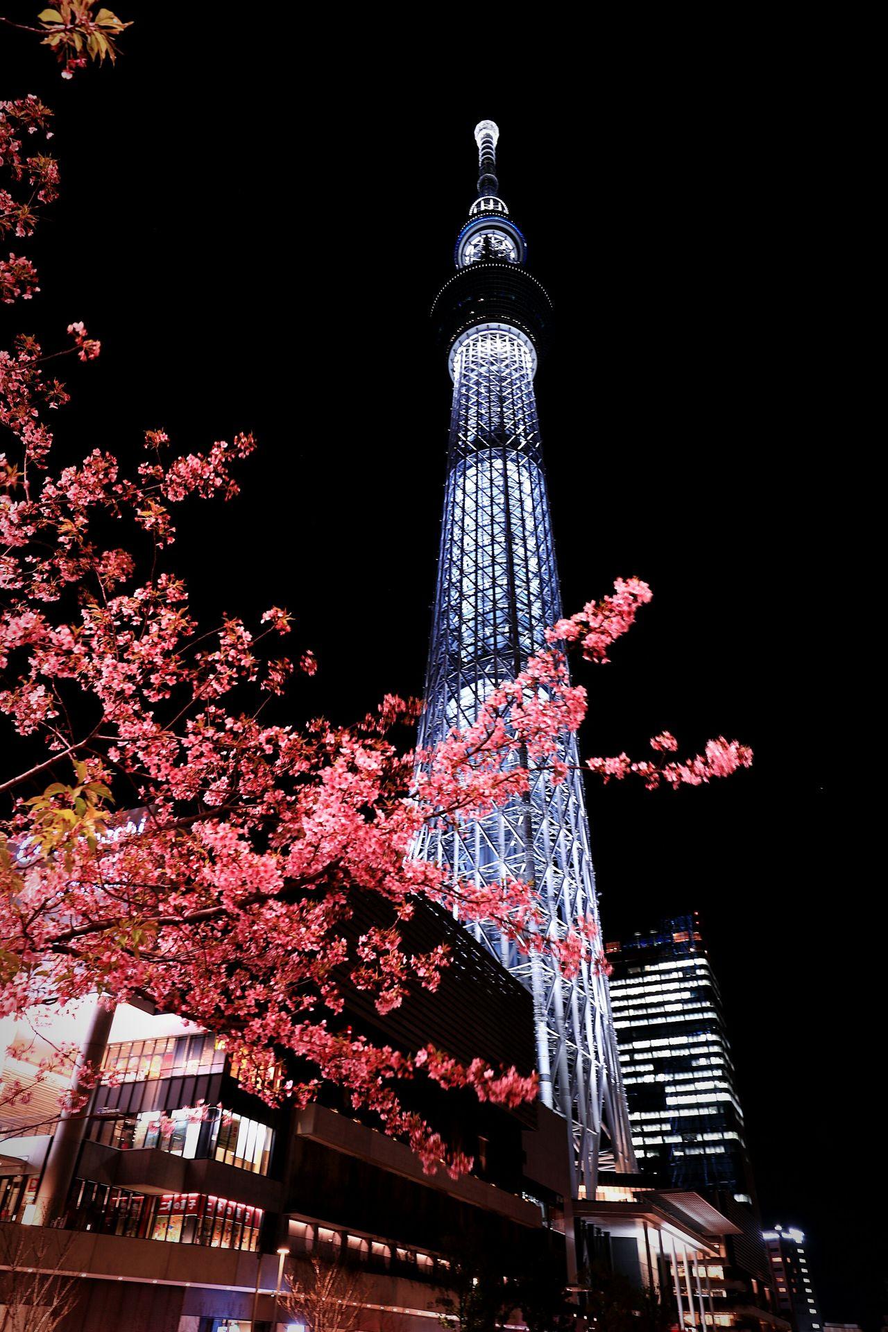 Tokyo Japan Skytree Tokyoskytree Illuminated Nightscape Nightphotography Nightview Flower Flowers Blossoms  Cherry Blossom