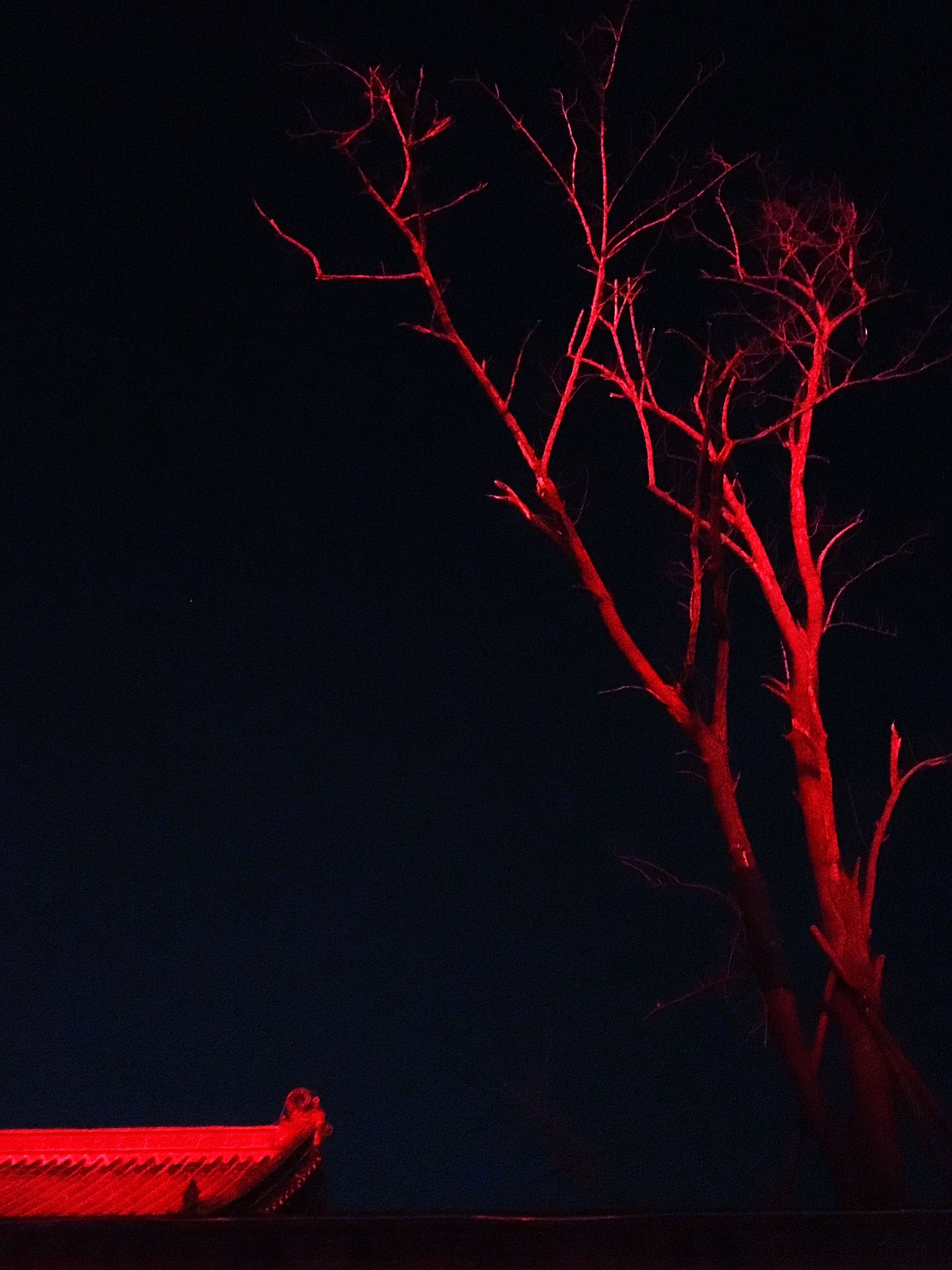 night, low angle view, illuminated, dark, red, sky, celebration, long exposure, glowing, branch, bare tree, tree, copy space, light - natural phenomenon, motion, no people, outdoors, firework display, silhouette, clear sky
