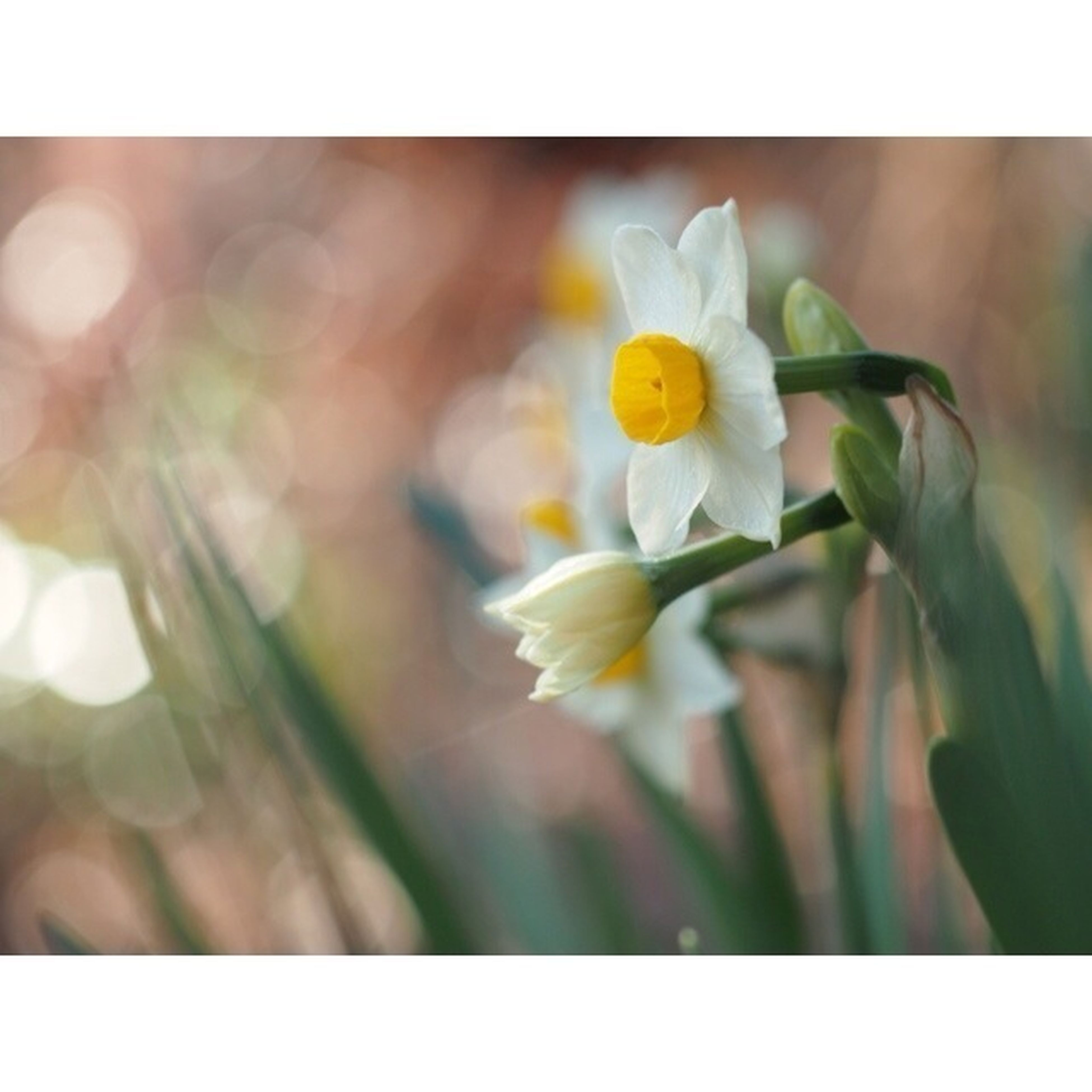 flower, petal, transfer print, freshness, fragility, flower head, growth, beauty in nature, yellow, auto post production filter, blooming, close-up, nature, focus on foreground, plant, pollen, white color, selective focus, single flower, in bloom