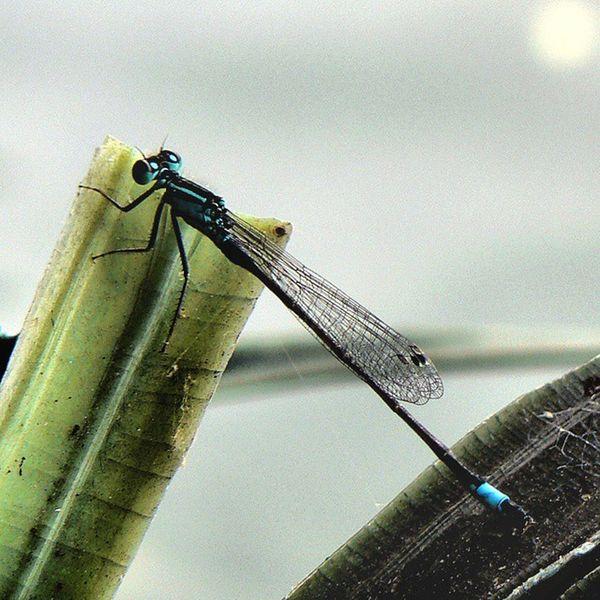ważka 💖😊🌾 Lake Dragonfly Macro Photography Amateurphotography Ważka Jezioro Makro Panasoniclumix 📷 Panasonic  Photoblogger Like4like L4l F4F Follow4follow Instadaily Zdjęciabezlimitu Nolimit Heyah Heyahnolimit @instaheyah
